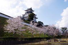 Kakegawa Castle in Shizuoka Prefecture looks so beautiful in spring.
