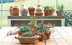Image result for indoor plant display