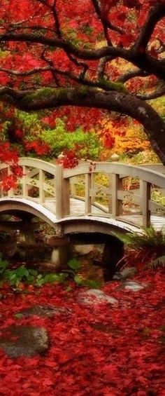 Autumn bridge, Japan