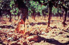 Pink Wines Chateau Fontainebleau under the grapevines producing them   Vins rosés Château Fontainebleau sous leurs vignes #rose #vin #pink #wine  ©Sebanado