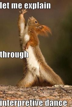 The Interpretive Dance Squirrel . The Interpretive Dance Squirrel Are we still doing more of what makes us happy? Funny Animal Memes, Funny Animal Pictures, Funny Animals, Cute Animals, Funny Memes, Baby Animals, Animal Pics, Memes Humor, Funniest Memes