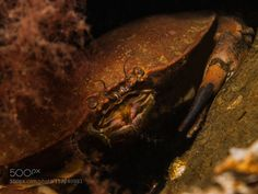 I see You! by tristan15 #nature #photooftheday #amazing #picoftheday #sea #underwater