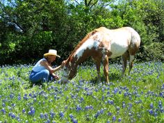 Natural Horse care home and training