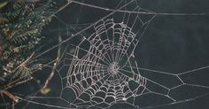 A fine carving might be admiringly described as 'just like a spider-web'