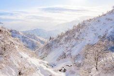 Niigata, Japani: Syvän lumen maa   Mondo.fi