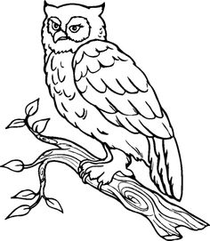 Free Owl Coloring Pages To Print