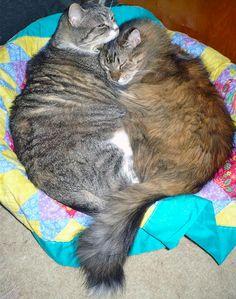 Cats making a heart #catlove #love #heart #valentinesday http://ihavecat.com/2014/02/08/kitty-love-part-2/