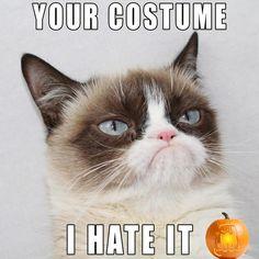 .My favorite Grumpy Cat face!