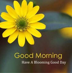 Are you looking for images for good morning beautiful?Browse around this site for unique good morning beautiful ideas. These unique images will brighten your day. Good Morning Quotes For Him, Good Morning Cards, Good Morning Picture, Good Morning Messages, Morning Pictures, Morning Pics, Happy Morning, Morning Coffee, Latest Good Morning Images