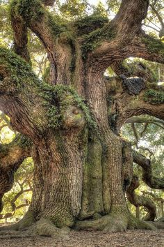 Nice #Trees