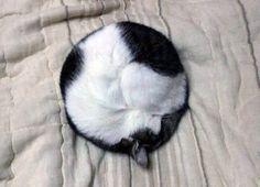 #Cats #Cat #Kittens #Kitten #Kitty #Pets #Pet #Meow #Moe #CuteCats #CuteCat #CuteKittens #CuteKitten #MeowMoe That's a 10/10 circle cat ... http://www.meowmoe.com/61371/