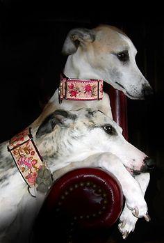 Pink Dog Collars, Martingale Collars, Greyhound - Posh Pawz