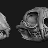 Homework for the CGMA course 'Sculpting Anatomy: from Animal to Creature'. Skull Anatomy, Serval, Anatomy Study, 3d Artist, Sculpting, Creatures, Statue, Artwork, Artists