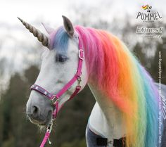 Halfter : Equest Pummelienhorn Halfter Uno Plus Fashion Cute Kawaii Animals, Baby Animals Super Cute, Cute Horses, Horse Love, Horse Halloween Costumes, Unicornios Wallpaper, Unicorn And Fairies, Unicorn Pictures, Horse Pattern