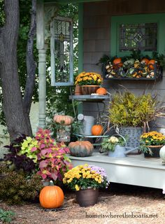 Fall Around The Potting Shed~ Pumpkins, mums, leaves, goldenrod & gourds harvested for a celebration of the season. #fall #pumpkins 3 repins