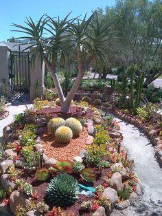 Jardín de cactus y suculentas no cactáceas