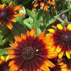 Sunflowers at the fair