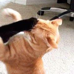 couple, icon ve cats We Heart It 'de resim Cute Cat Memes, Funny Cats, Cat Profile, Best Friend Wallpaper, Dog Tumblr, Cute Couple Wallpaper, Cat Couple, Manga Couple, Cat Icon