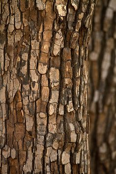 Tree Patterns, Patterns In Nature, Textures Patterns, Natural Forms, Natural Texture, Easy Canvas Art, Old Trees, Brown Aesthetic, Nature Tree