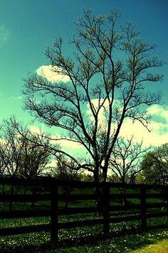 spring      http://americanfolklife.blogspot.com/2012/02/folk-issue-iv-country-comforts.html