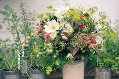 A Day in the Life … Pyrus: growing seasonal and organic wedding blooms in a Scottish walled garden - The Natural Wedding Company Summer Flowers, Cut Flowers, Flower Hair, Flowers In Hair, Hair Garland, Flower Farmer, Pyrus, Walled Garden, Wonderful Flowers