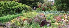 Simplify Your Gardening: Perennial Vegetables — Mother Earth News