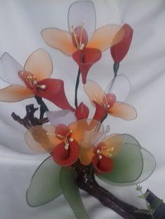 Kancsó orchidea.