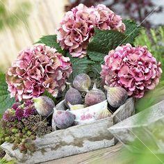 """Über 1.000 Ideen zu """"Hortensien Arrangements auf Pinterest Rosen ..."""