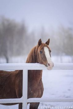 """equestrian-vibes: """" snow miracles na We Heart It. """""""