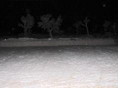 December 31st, 2014 snow in Joshua Tree, Ca