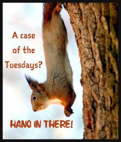 Tuesday funny | Animal humor | Cute | Long week | Only Tuesday: A case of the Tuesdays. HANG IN THERE!