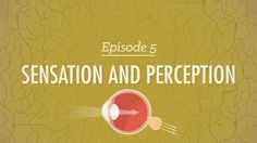 Sensation & Perception - Psychology #5