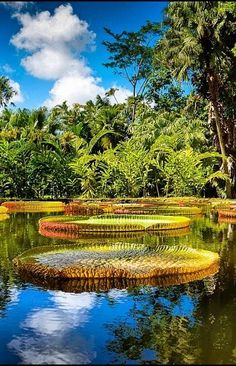 Pamplenousses garden tourist attraction in Mauritius
