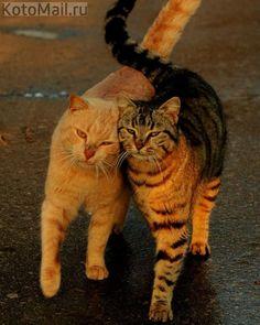 Дружба - это главное!
