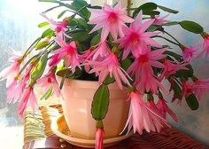 Idea Of Making Plant Pots At Home // Flower Pots From Cement Marbles // Home Decoration Ideas – Top Soop Orchid Cactus, Cactus Flower, Flower Pots, Easter Cactus, Cactus E Suculentas, Cactus House Plants, Neals Yard Remedies, Beautiful Flowers Wallpapers, Christmas Cactus