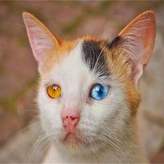 Това БГ коте от снимката е най-големият хит по целия свят в нета