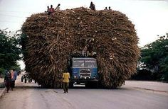 A truck transports stubbles of corn for animals in #Mogadishu
