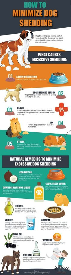 If you are an owner of a pet, especially a dog, then there are high chances that your carpet, sofas and your clothes are all covered in dog hair because of the excessive shedding. It can be frustrating when you seem to have no control over the excessive shedding from your dog. Here are the top 5 causes for excessive shedding and what you can do to reduce it and bring it under control: Infographic... >>> Check out this great article.