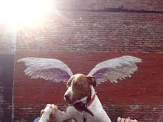 standing in front of angel wings - Google Search