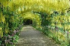 Hampton court palace, England. This is the flower arch, not the wisteria one that people are posting.