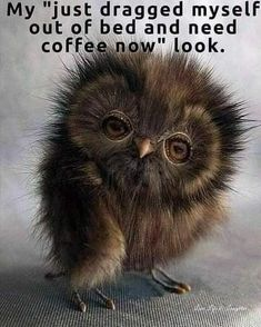 Coffee Meme, Coffee Quotes, Coffee Drinks, Coffee Carts, Coffee Coffee, Funny Animal Pictures, Cute Funny Animals, Funny Cute, Coffee Is Life