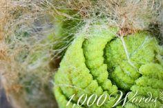 Ferns ~  Upper Peninsula ~ 1,000 Words Photography