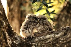 """500px / Photo """"Owls Couple"""" by Diogo Paulo"""