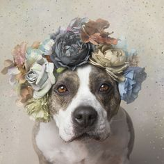 Picture of a pit bull dog in flowers
