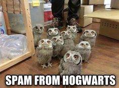 Spam owls lol