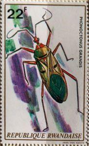 Assassin Bug (Phonoctonus grandis)