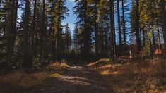 Forest Wallpaper, Trees, Mountains, Nature, Naturaleza, Tree Structure, Nature Illustration, Wood, Off Grid