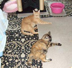 今度はにゃん吉 - http://iyaiyahajimeru.jp/cat/archives/59703