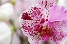Orchid Care: Answers to 5 Frequently Asked Questions