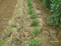 Απρίλιος στο αγρόκτημα Country Roads, Garden, Plants, Tape, Garten, Lawn And Garden, Gardens, Plant, Gardening